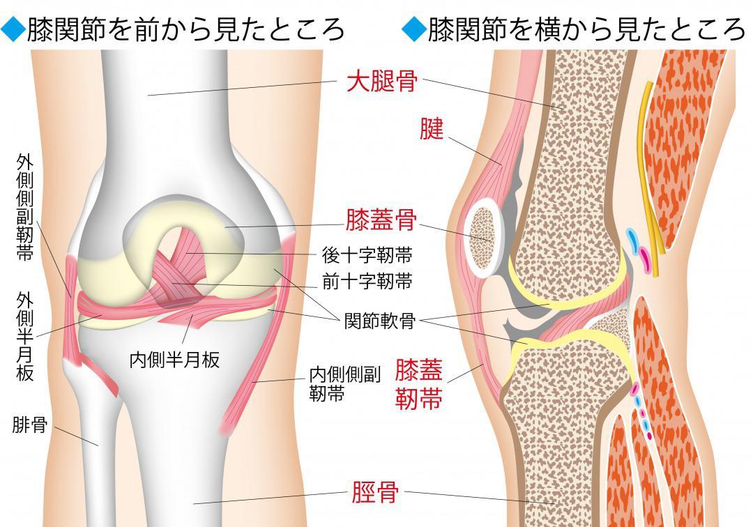 の お が 膝 痛い 皿 膝をつくと痛い…!耐えられないような痛みの原因と解決方法