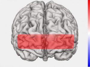 【ゼンタングル】VS【ぬり絵】両方試して脳の血流を調べてみました(シリーズ第4回)