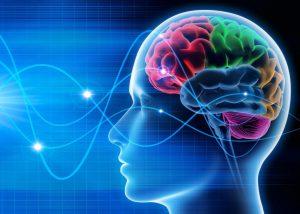 【脳修復ワードパズルの働き】医師が解明!記憶力・集中力を担う脳の全部位が活性化!?