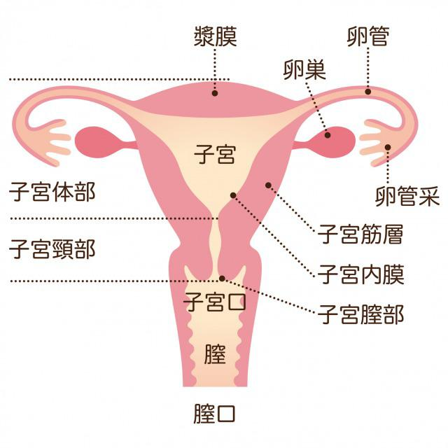 Uterine fibroid2.jpg