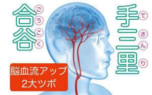 【認知症予防体操②】認知機能アップを試験で実証!脳の血流アップが期待できる2大ツボ刺激