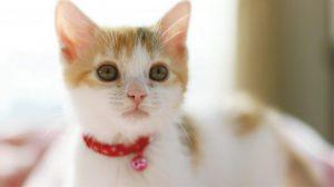 【高血圧の人へ】2月22日は猫の日です。猫を飼うと血圧が下がる?